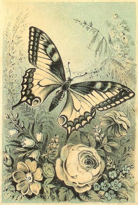 fondo-mariposa-vintage-scrapbooking (2) (471x700, 345Kb)