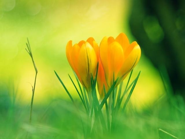http://img0.liveinternet.ru/images/attach/c/7/97/560/97560782_Nature_Flowers_Beautiful_yellow_flowers_030334_29.jpg