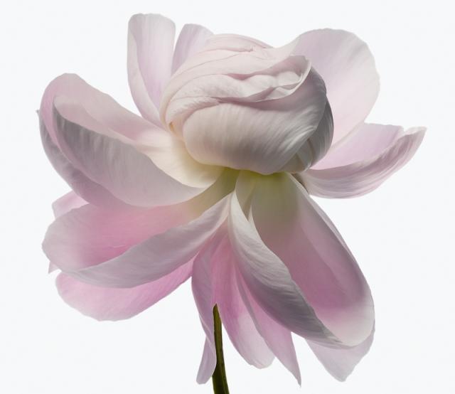 Пол Ланге цветы фото 3 (640x554, 153Kb)
