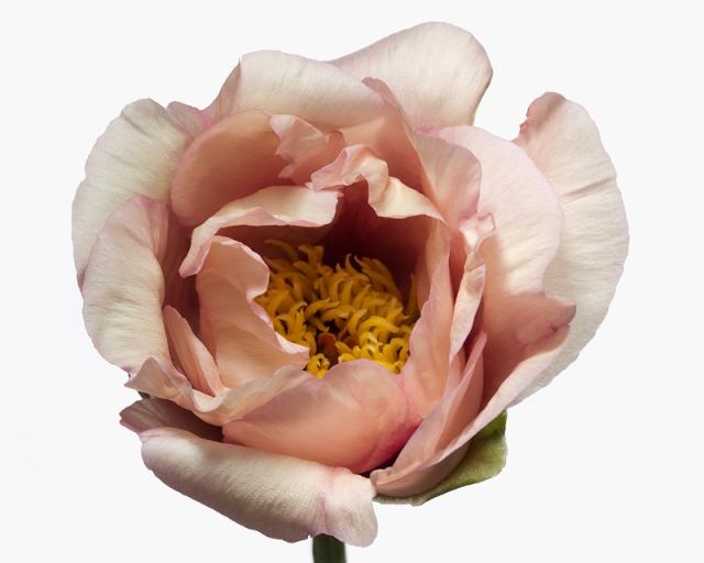 Пол Ланге цветы фото 5 (640x512, 169Kb)