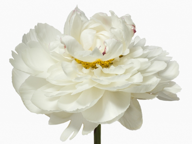 Пол Ланге цветы фото 7 (640x479, 135Kb)