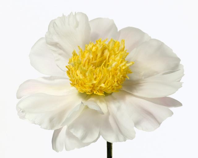 Пол Ланге цветы фото 9 (640x512, 134Kb)