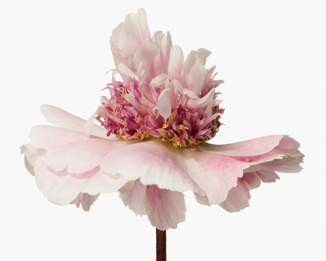 Пол Ланге цветы фото 10 (640x512, 130Kb)