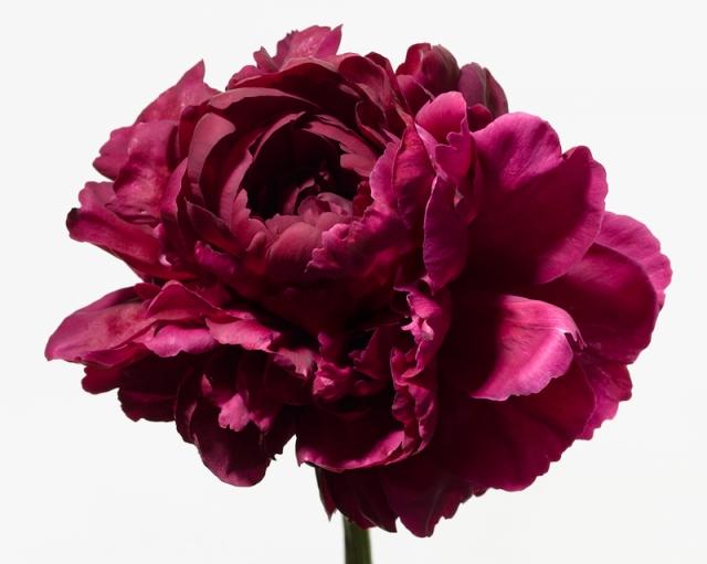Пол Ланге цветы фото 11 (640x511, 176Kb)