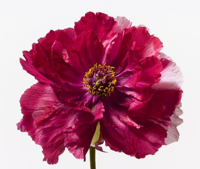 Пол Ланге цветы фото 13 (640x542, 217Kb)