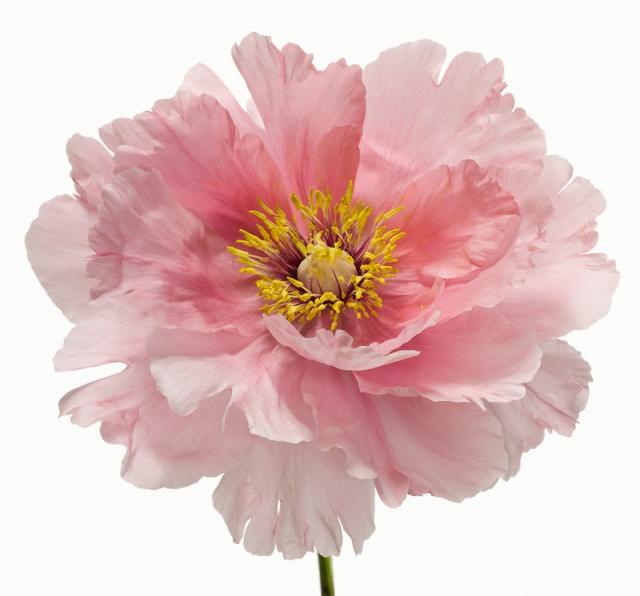 Пол Ланге цветы фото 15 (640x596, 202Kb)
