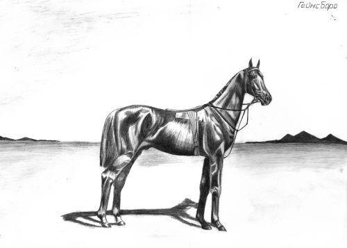 Horse2 (500x357, 18Kb)
