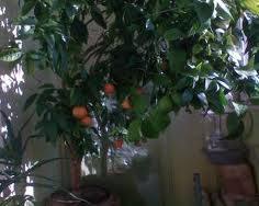 5087732_limon (236x188, 8Kb)