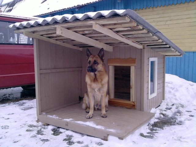 """Приют для животных """"Аллиса"""" просит рубцовчан о помощи"""