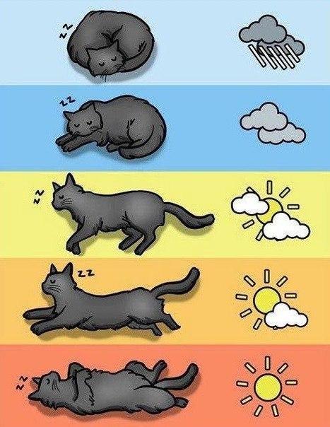 Посмотри на кошку и узнай погоду на ближайшее время!