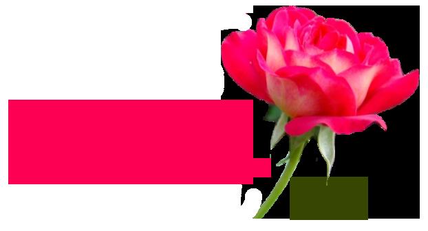 roza (622x336, 94Kb)