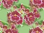 flor (20) (150x113, 9Kb)