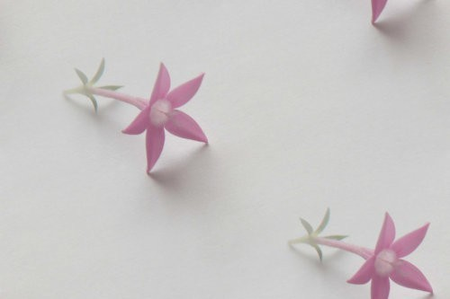 flor (118) (500x333, 14Kb)