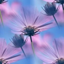 flor (42) (250x250, 15Kb)