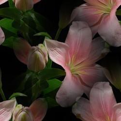 flor (43) (250x250, 15Kb)