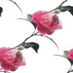 flor (24) (150x150, 18Kb)