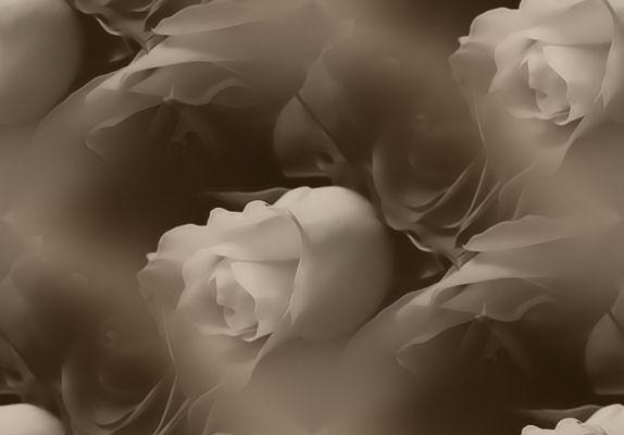 flor (172) (574x400, 20Kb)