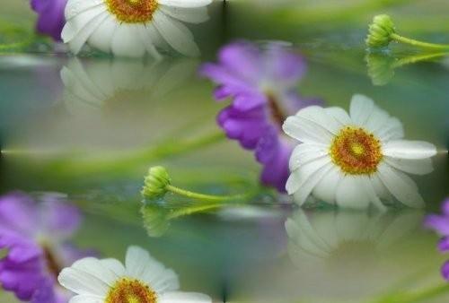 flor (127) (500x338, 27Kb)