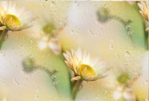 flor (128) (500x339, 32Kb)