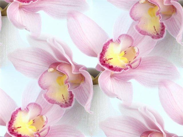 flor (202) (640x480, 42Kb)