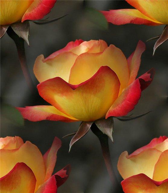 flor (170) (557x640, 44Kb)