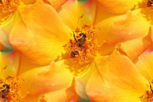 flor (187) (640x426, 44Kb)