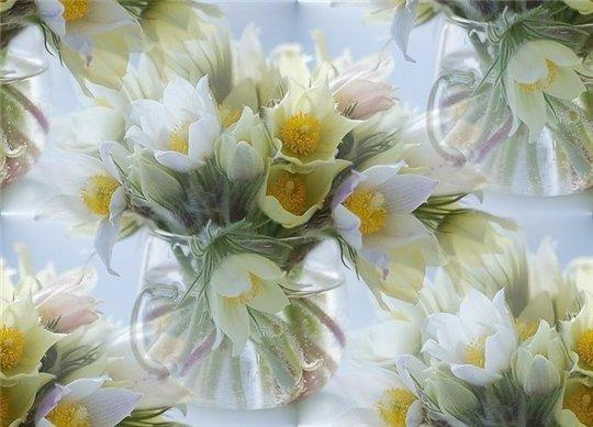 flor (165) (540x389, 46Kb)