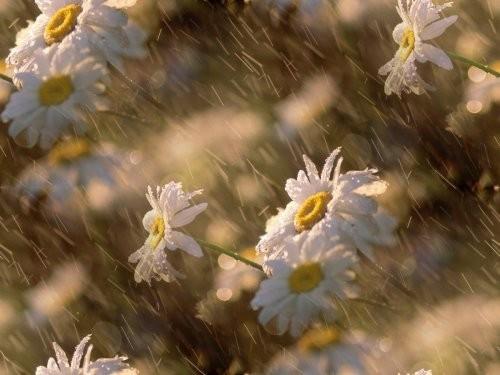 flor (143) (500x375, 46Kb)