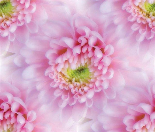 flor (228) (640x548, 46Kb)
