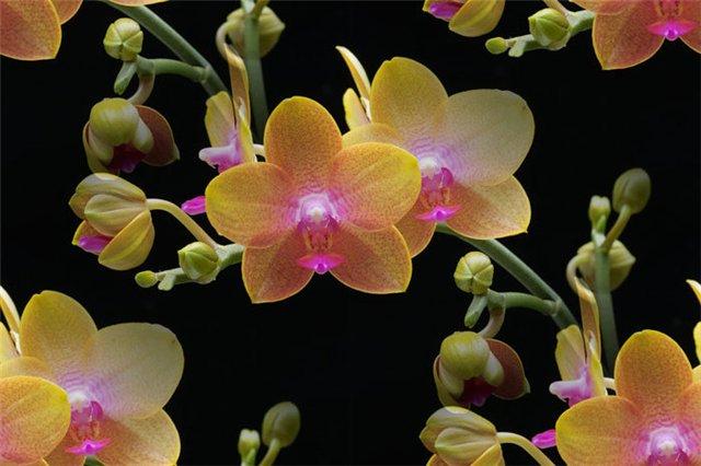 flor (191) (640x426, 50Kb)