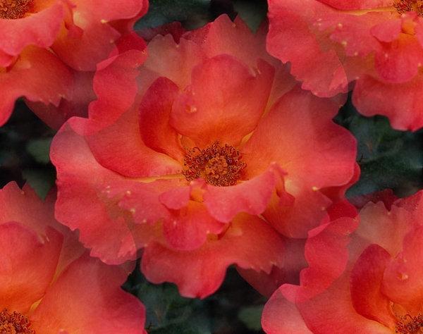flor (176) (600x474, 57Kb)