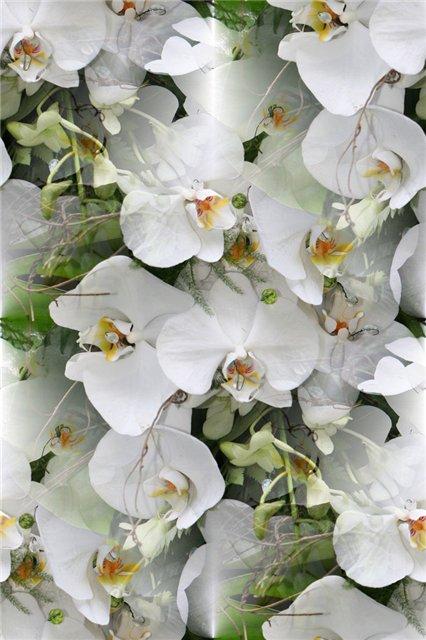 flor (98) (426x640, 63Kb)