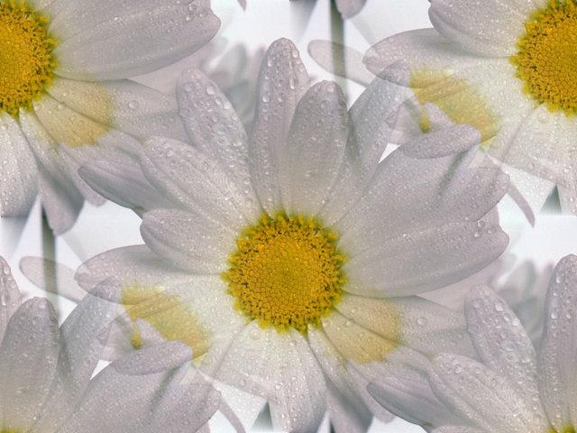 flor (215) (640x480, 70Kb)
