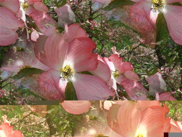 flor (218) (640x480, 74Kb)