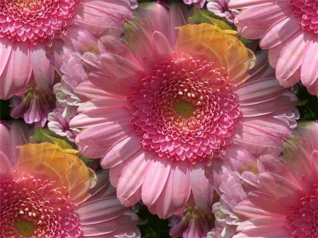 flor (219) (640x480, 76Kb)