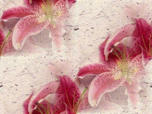 flor (220) (640x480, 77Kb)