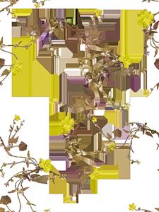 prozrac) (219) (225x300, 93Kb)