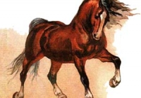 horse (200x140, 24Kb)