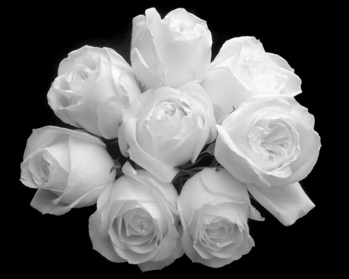 цветы-картинки-для дневника (700x560, 122Kb)