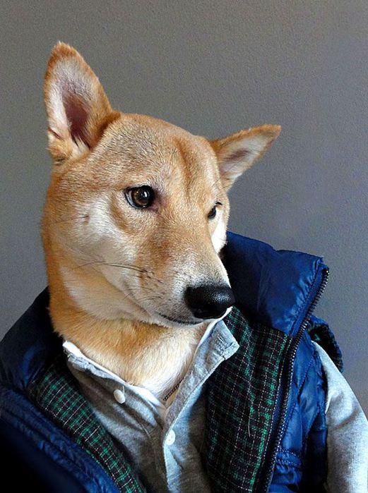 Прикинутый пёс Бодхи 97767256 bodhi1 собаки одежда мужские модные