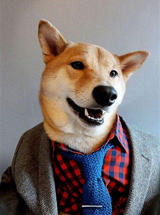 Прикинутый пёс Бодхи 97767261 bodhi2 собаки одежда мужские модные