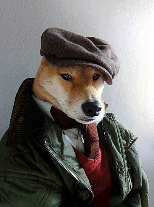 Прикинутый пёс Бодхи 97767264 bodhi3 собаки одежда мужские модные