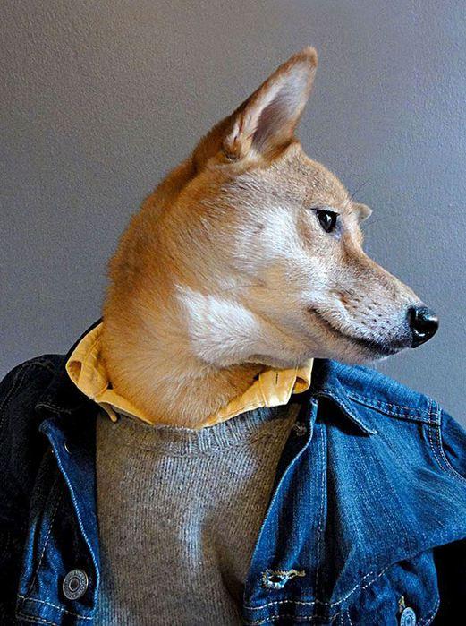 Прикинутый пёс Бодхи 97767266 bodhi4 собаки одежда мужские модные