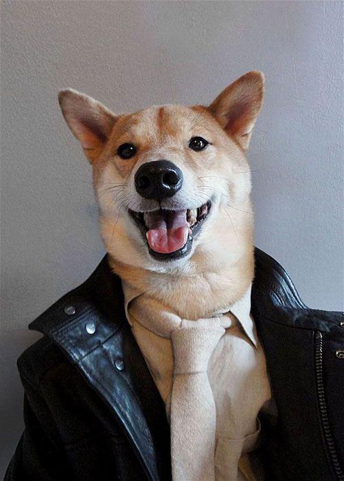 Прикинутый пёс Бодхи 97767272 bodhi5 собаки одежда мужские модные