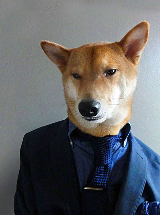 Прикинутый пёс Бодхи 97767273 bodhi6 собаки одежда мужские модные