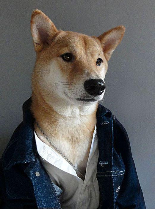 Прикинутый пёс Бодхи 97767275 bodhi7 собаки одежда мужские модные