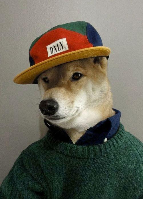 Прикинутый пёс Бодхи 97767277 bodhi8 собаки одежда мужские модные
