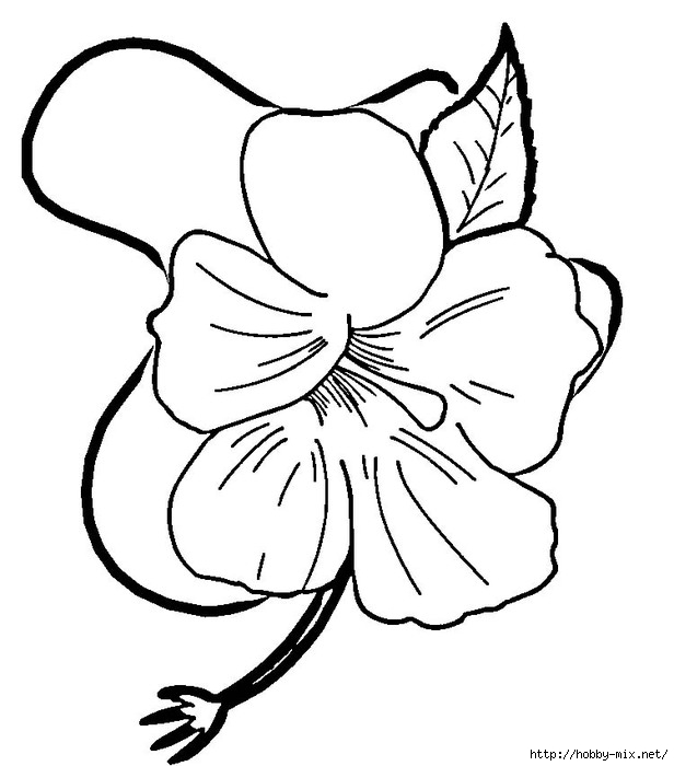 hibiscus-flower-coloring-page (616x700, 132Kb)