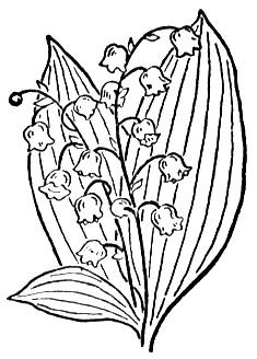 lily-of-the-valley-2-coloring-page (235x328, 22Kb)
