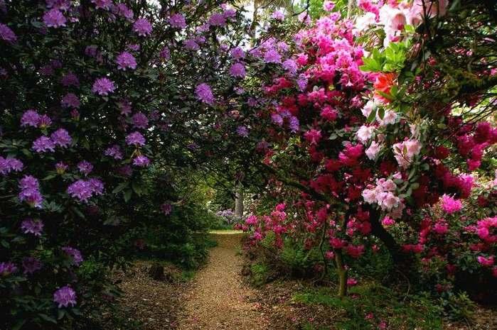 Рододендроновый парк-Westerstede Rhododendronpark. 99068